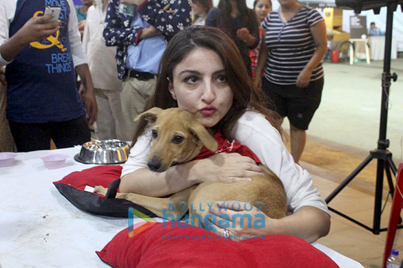 SPOTTED: Saif Ali Khan, Alia Bhatt and other celebs help animals find homes