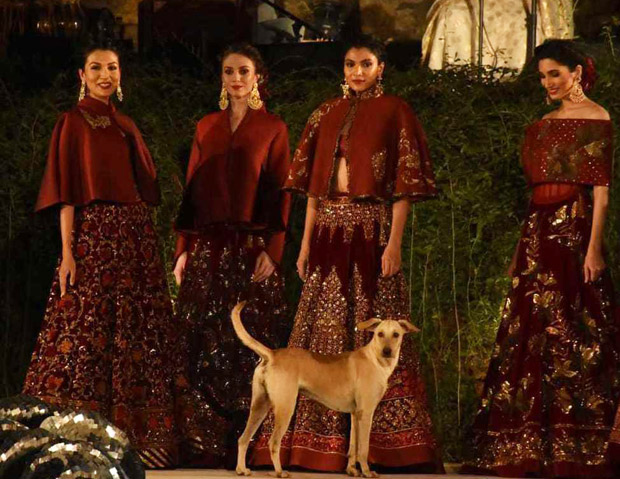 Not Sidharth Malhotra but this DOG was a showstopper in Rohit Bal's show (watch video)