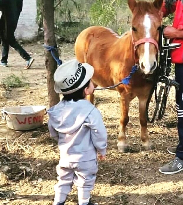 Little Prince Of Pataudi Taimur Ali Khan chills a pony, befitting his royal lineage (see pic)