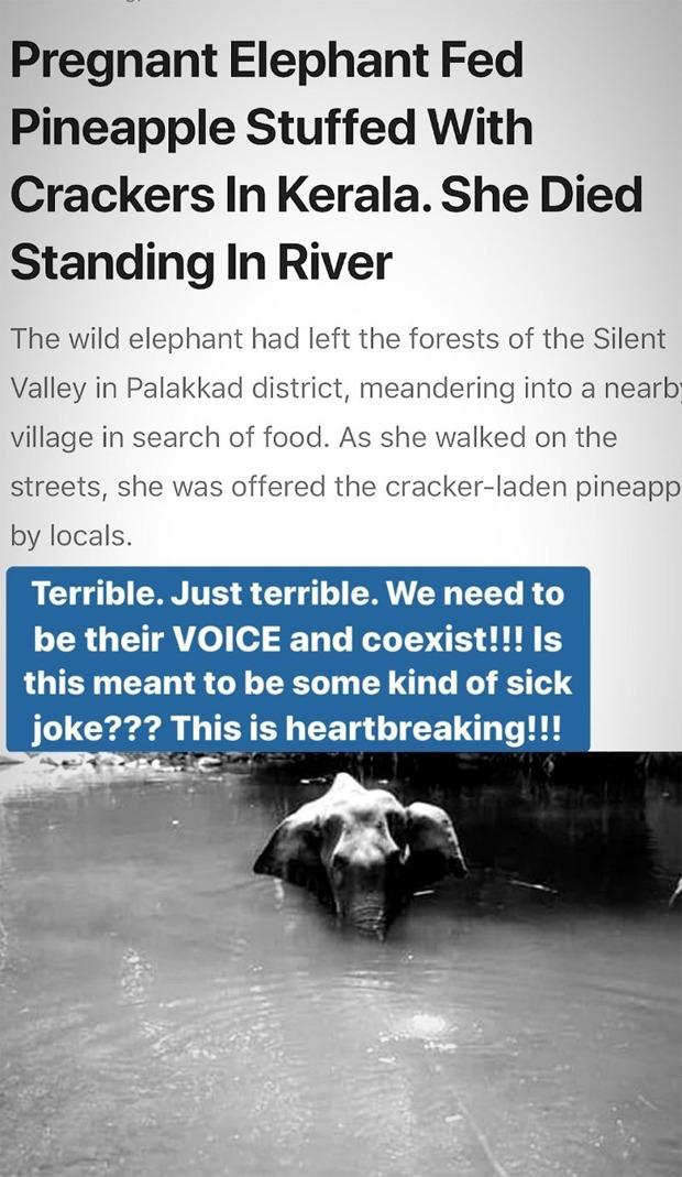 Alia Bhatt and Shraddha Kapoor condemn the act of killing of the pregnant elephant in Kerala