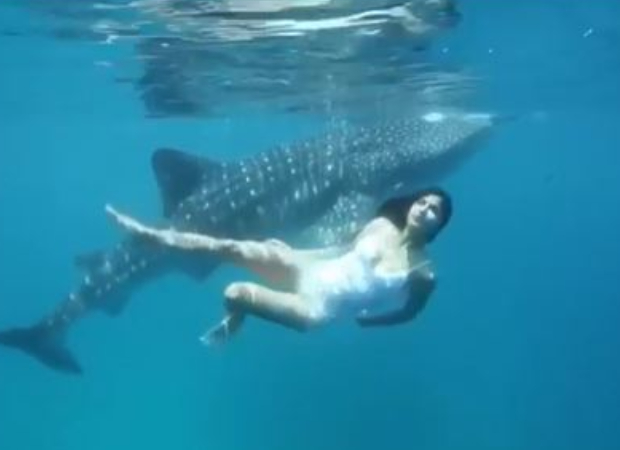 Watch: Katrina Kaif swims along with her 'incredible friend' in the ocean